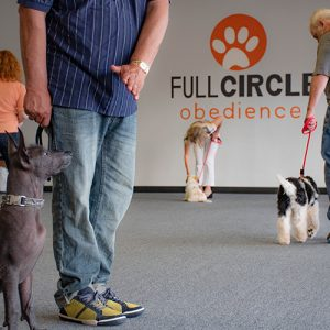 Dogs and their owners practicing sit in obedience class